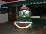 senor frogs