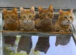 4 little kittens..