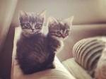 instagram-amazinggrayce-cats