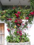 roses-on-wall