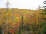 mn-panorama-leaves-turned-2